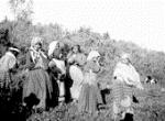 Indian girls picking berries Nulki Lake